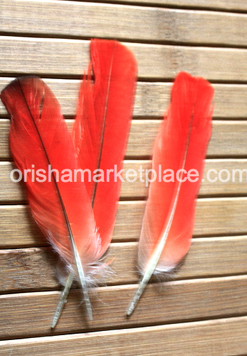 Iye Ikodide Ikodidere Red parrot feather
